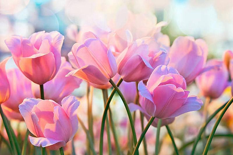 Đặc tính về sự sống thể hiện sự mạnh mẽ của các loài hoa